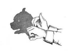 sombra de pill bull
