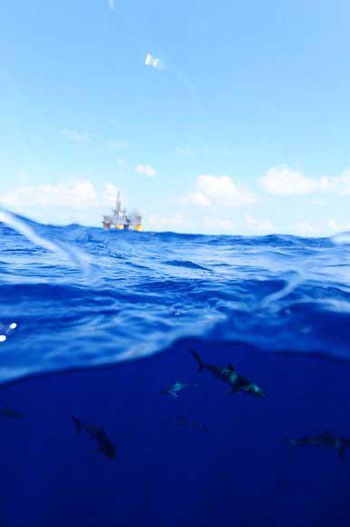tiburones nadan bajo plataforma petrolera en el Golfo de México