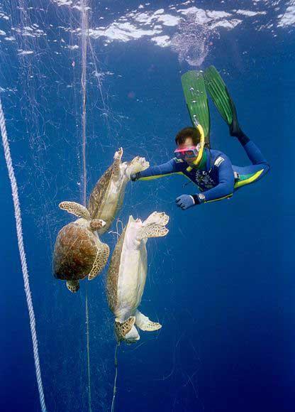 tortugas enredadas, un buzo rescata los cuerpos