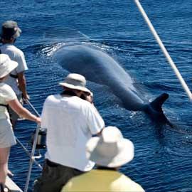 turistas fotografían una ballena