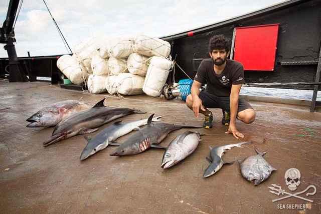 animales muertos por redes de deriva