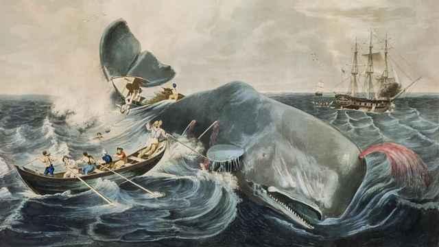 caza de un cachalote en el siglo XIX