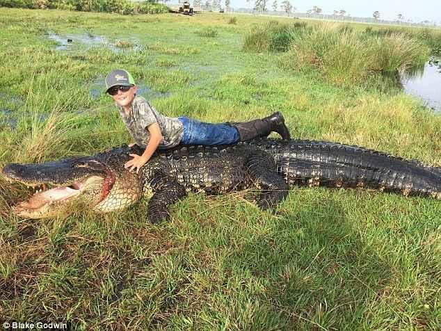 cocodrilo gigante florida 2