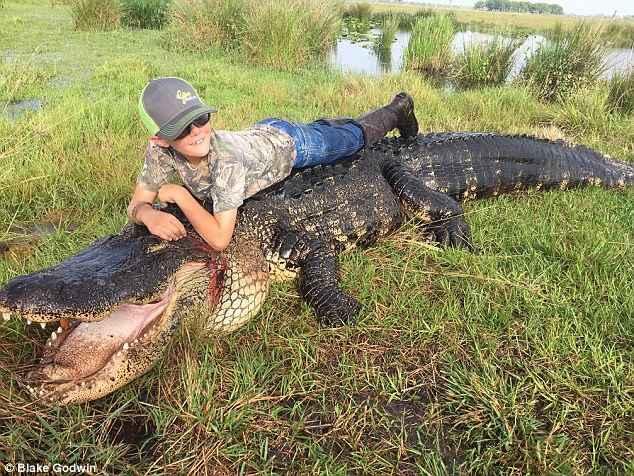cocodrilo gigante cazado en Florida