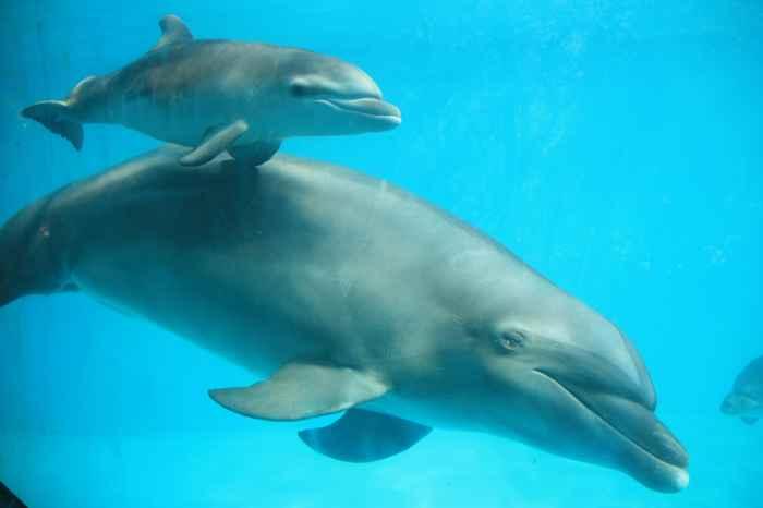 delfín madre y su cría