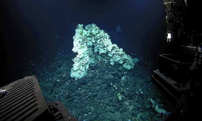 esponja marina gigante descubierta en Hawái