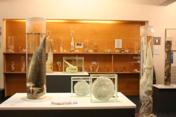Faloteca islandesa (Icelandic Phallological Museum)