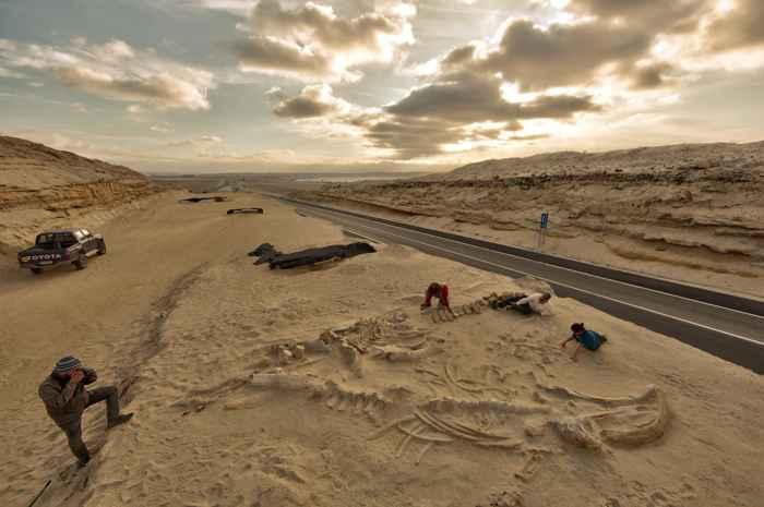fósiles de ballena en el desierto de Atacama, Chile
