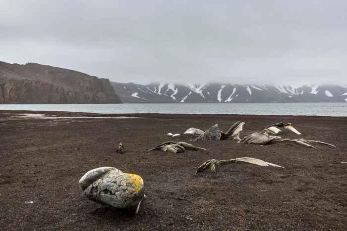 huesos de ballena en la Isla Decepción