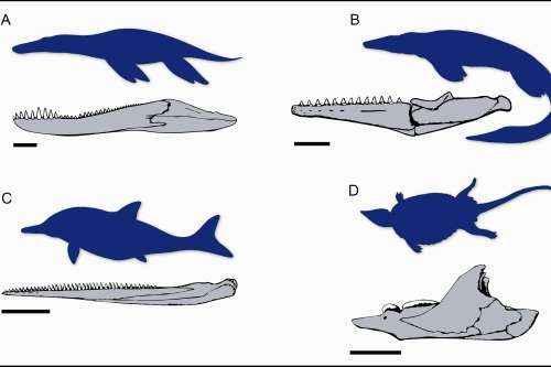 mandíbulas y cuerpos de reptiles marinos del Mesozoico