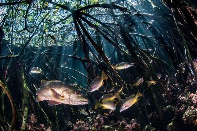 manglares de la Isla Fernandina