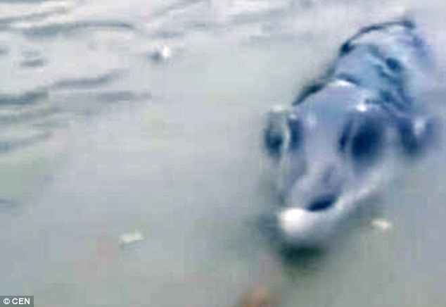 monstruo marino avistado en China