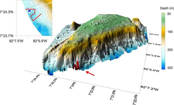 detalle de la agrupación de cangrejos en la montaña submarina Banco Hannibal