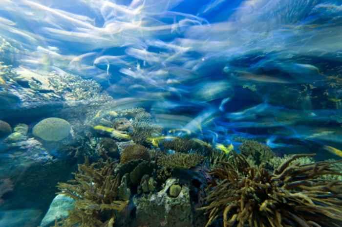 nitrógeno desde los mares del Cretácico