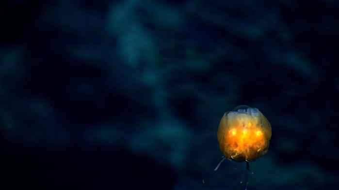 organismo marino para la lcha contra el cáncer