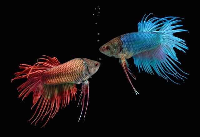 los peces no tienen cuello