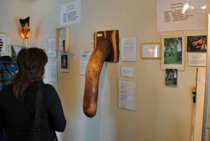 pene expuesto en el Icelandic Phallological Museum