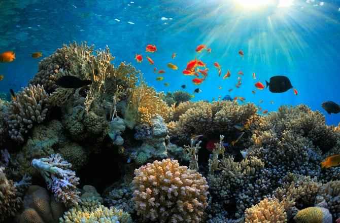 súper corales resistentes al cambio climático