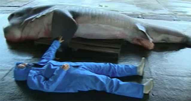 tiburón de boca ancha pescado en Japón