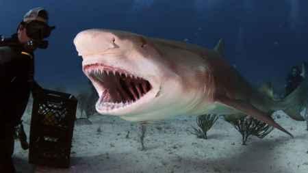 tiburón y buzo