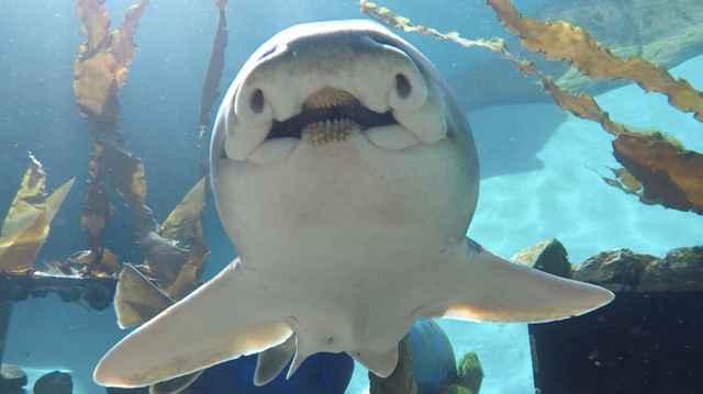 los tiburones tienen personalidad