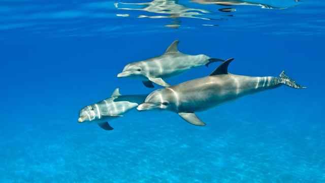 trio de delfines