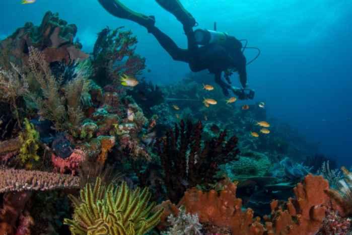 arrecife de coral en Raja Ampat