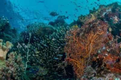 arrecife saludale