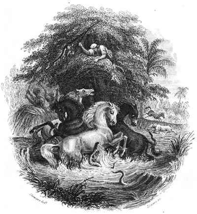 ataque de anguilas eléctricas a caballos (Alexander von Humboldt)
