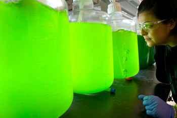 biocombustibles de algas