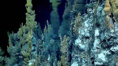 camarones Chorocaris y cangrejos Austinograea wiliamsi en un chimenea hidrotermal