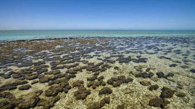 cianobacterias del océano