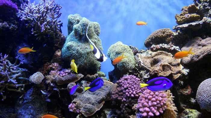 océanos sanos