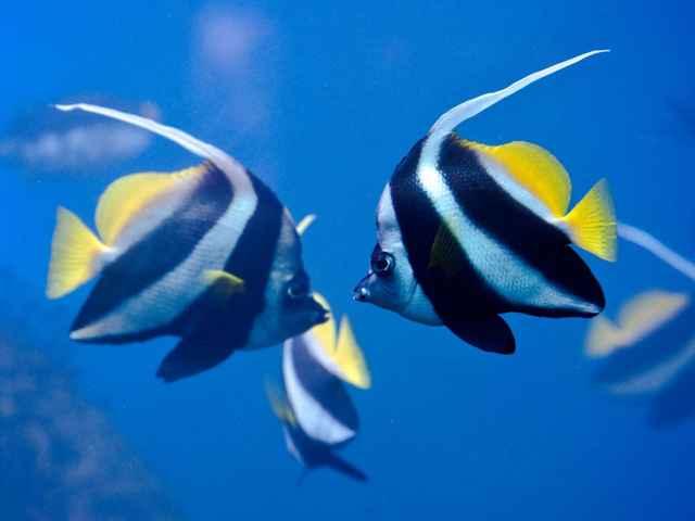 pez cebra - vida depués de la muerte