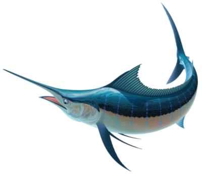 pez espada dibujo