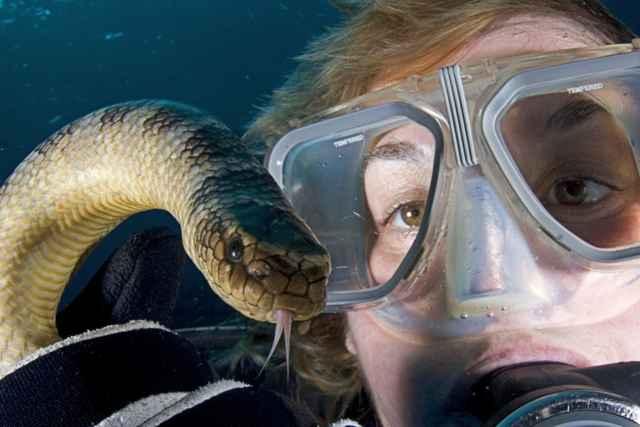 serpiente marina Aipysurus laevis