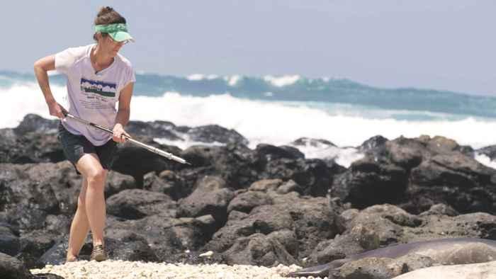 vacunación de una foca en Hawái