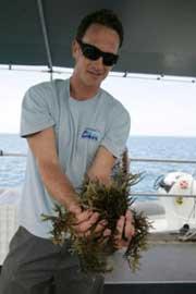 algas invasoras de arrecifes de coral en Hawai