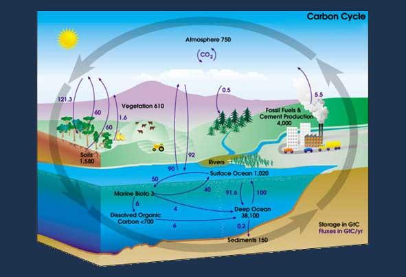 ciclo del carbono antropogénico