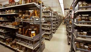 colección de peces en el Museo Smithsonian