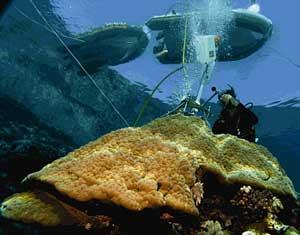 corales porites, extracción de muestras