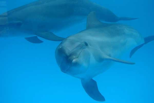 delfines, LIDO midiendo los ruidos contaminación acustica