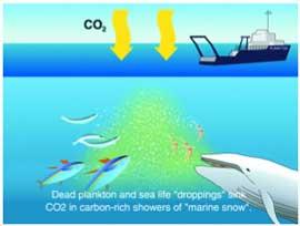 fertilización del océano desde un barco