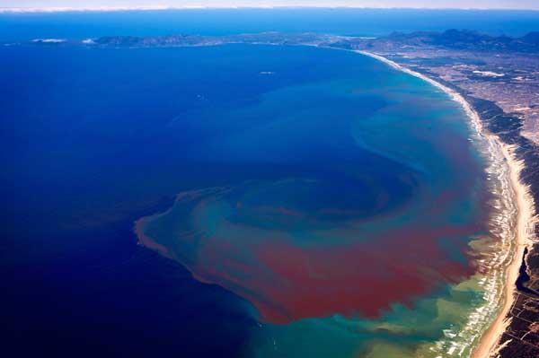 floración de algas costa de Benguela, Sur África