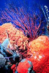 fondo de mar con corales