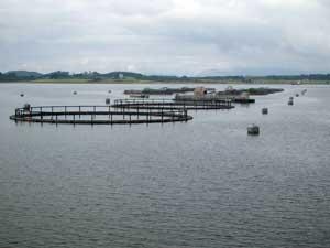 granja marina