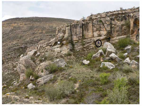 Las Mingachas, fósil Polyconites hadriani