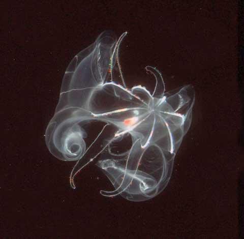 medusa Dudley Foster