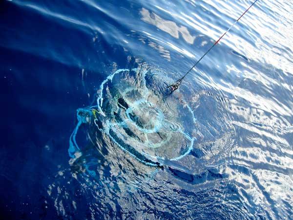 Recogiendo muestras en el Mar de los Sargazos