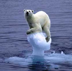 oso polar en el último témpano de hielo